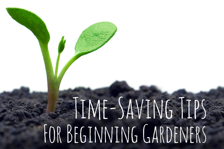 Gardening tips & tricks to save time!